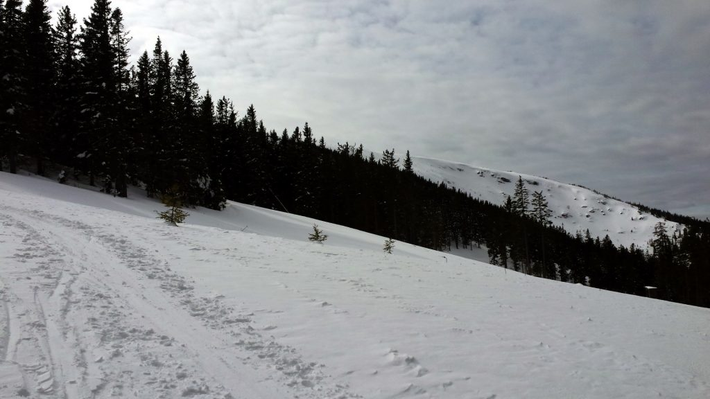 Trail towards the top