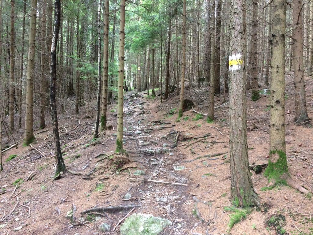 Follow the white-yellow-white marked route (Törlweg)