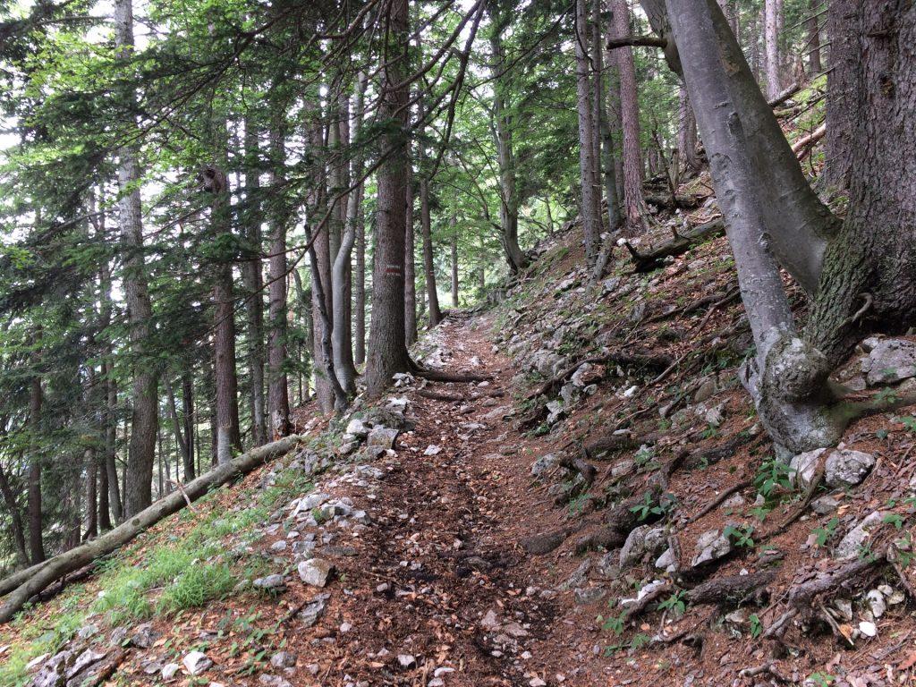 Hiking up via Törlweg