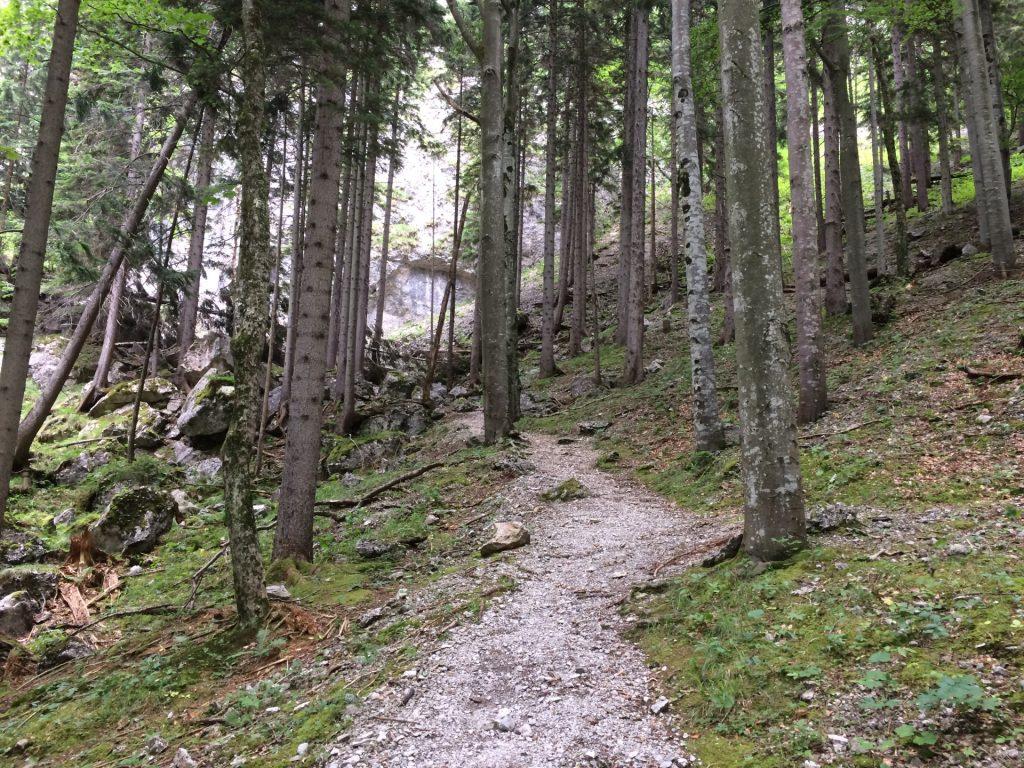 Trail towards the start of Teufelsbadstubensteig
