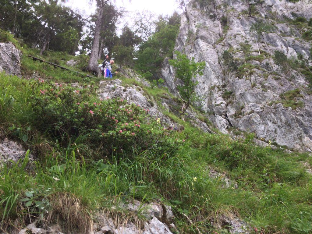 Descending via Wachthüttelkamm