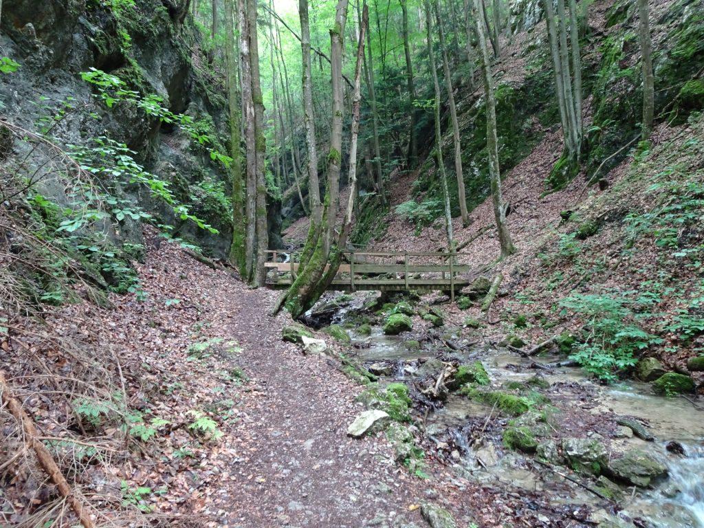 Trail in the Steinwandklamm