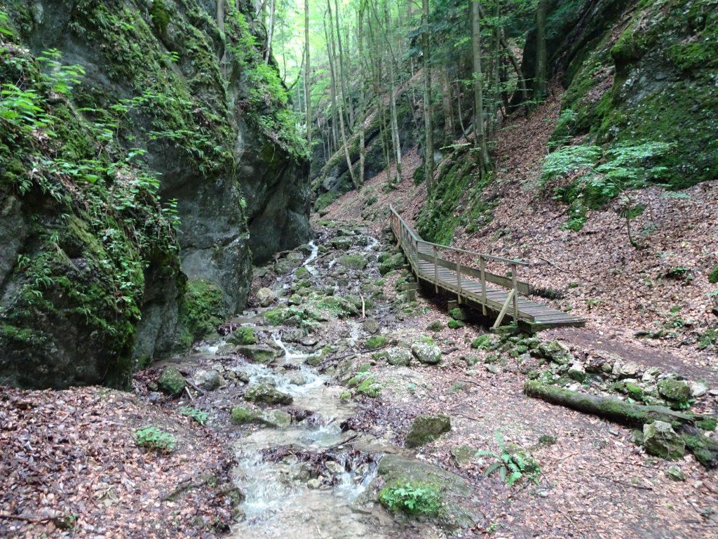 Trail next through the small river