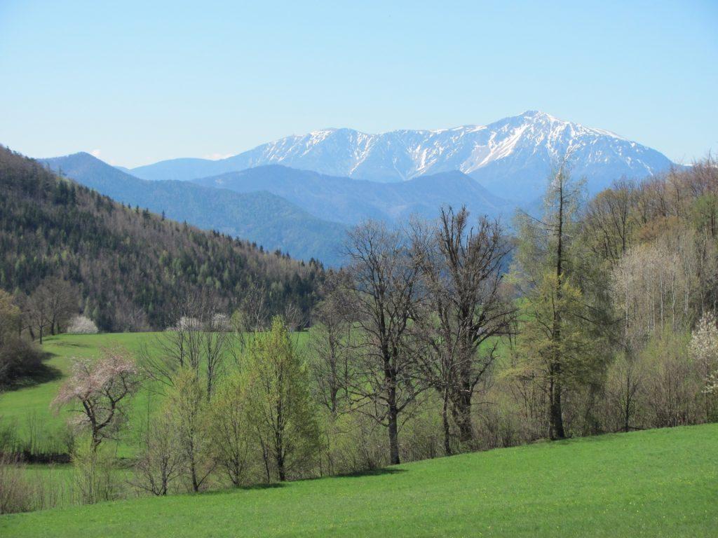 View to Schneeberg (from Gasthaus Jagasitz)