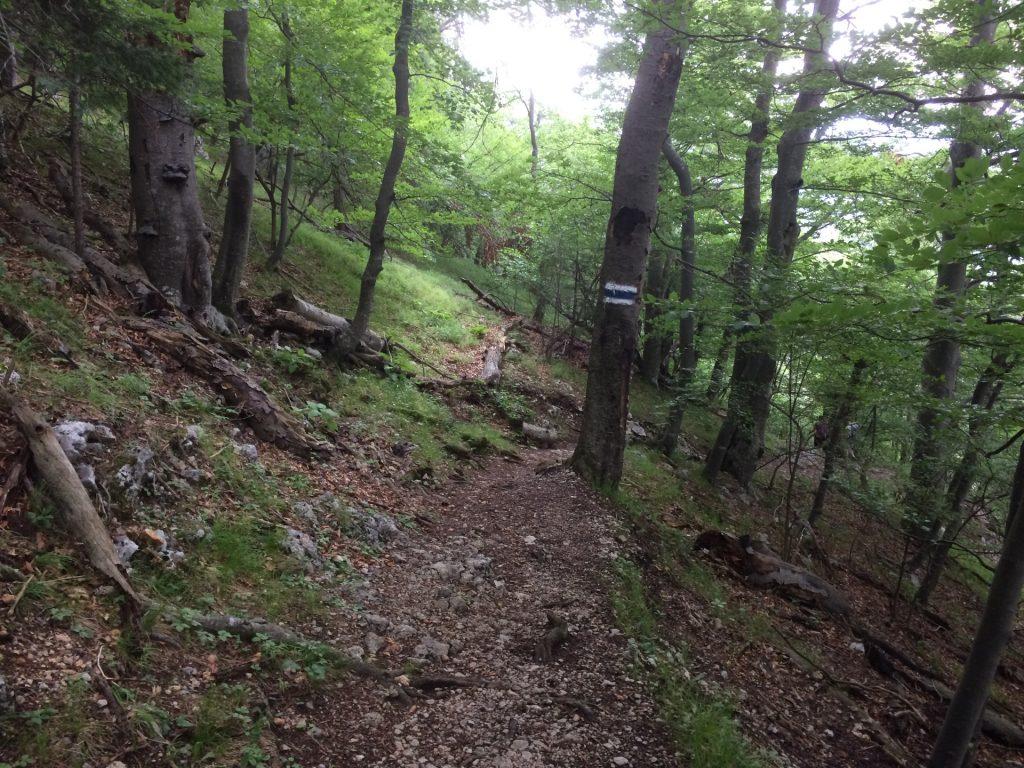 Trail towards Myrafälle