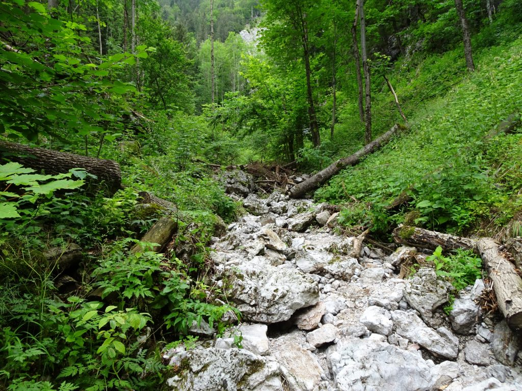The trail goes along a streambed