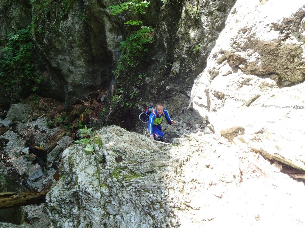 Herbert climbing