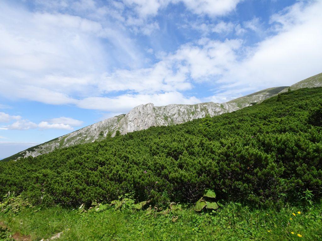 Trail towards Schneeberg