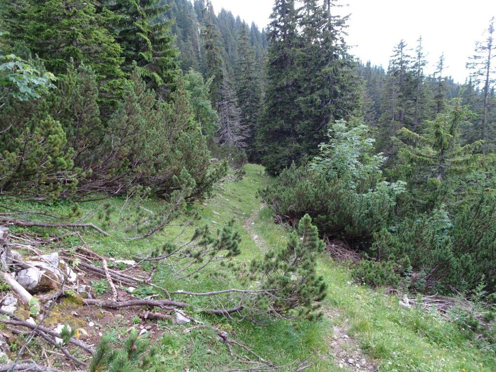 Hard to find trail towards Kienthalerhütte