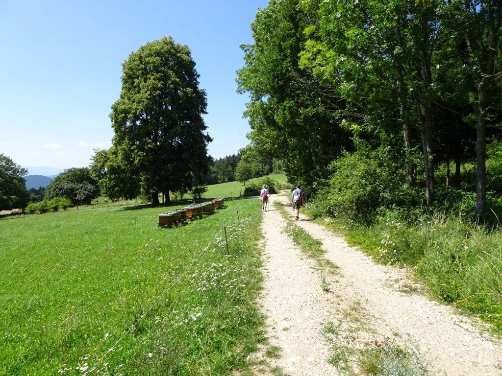 Walking towards the Hanslsteig