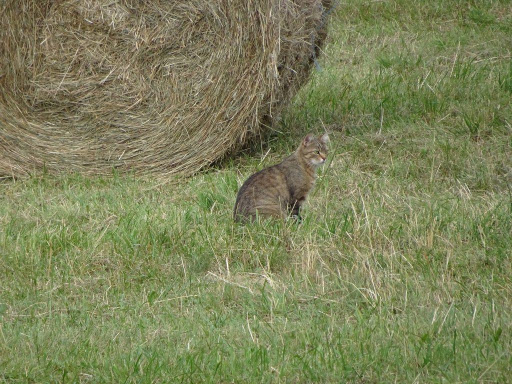 The cat of Gasthof Postl