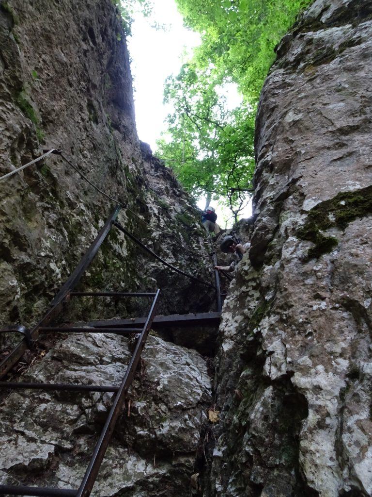 Ladder at the Drobilsteig