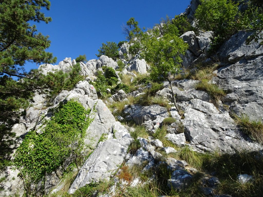 Now the trail becomes alpine :-)