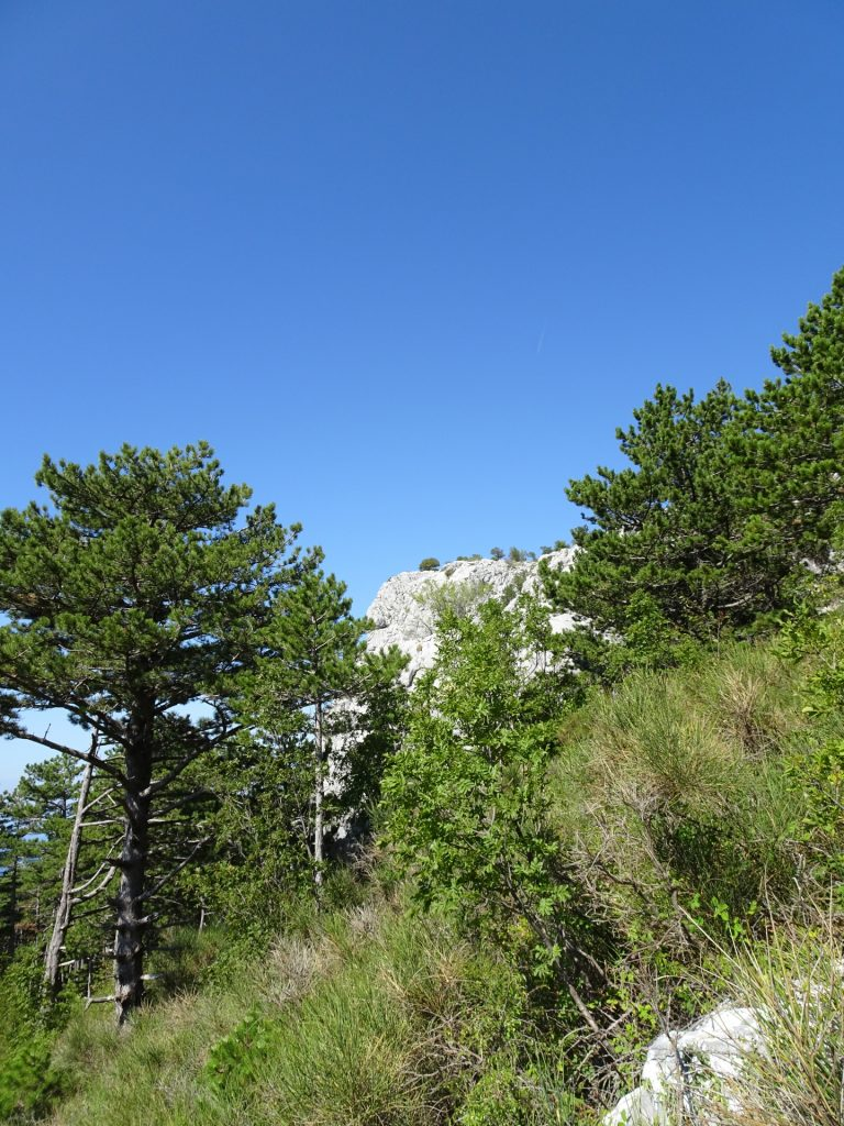 View back towards Srtrazina