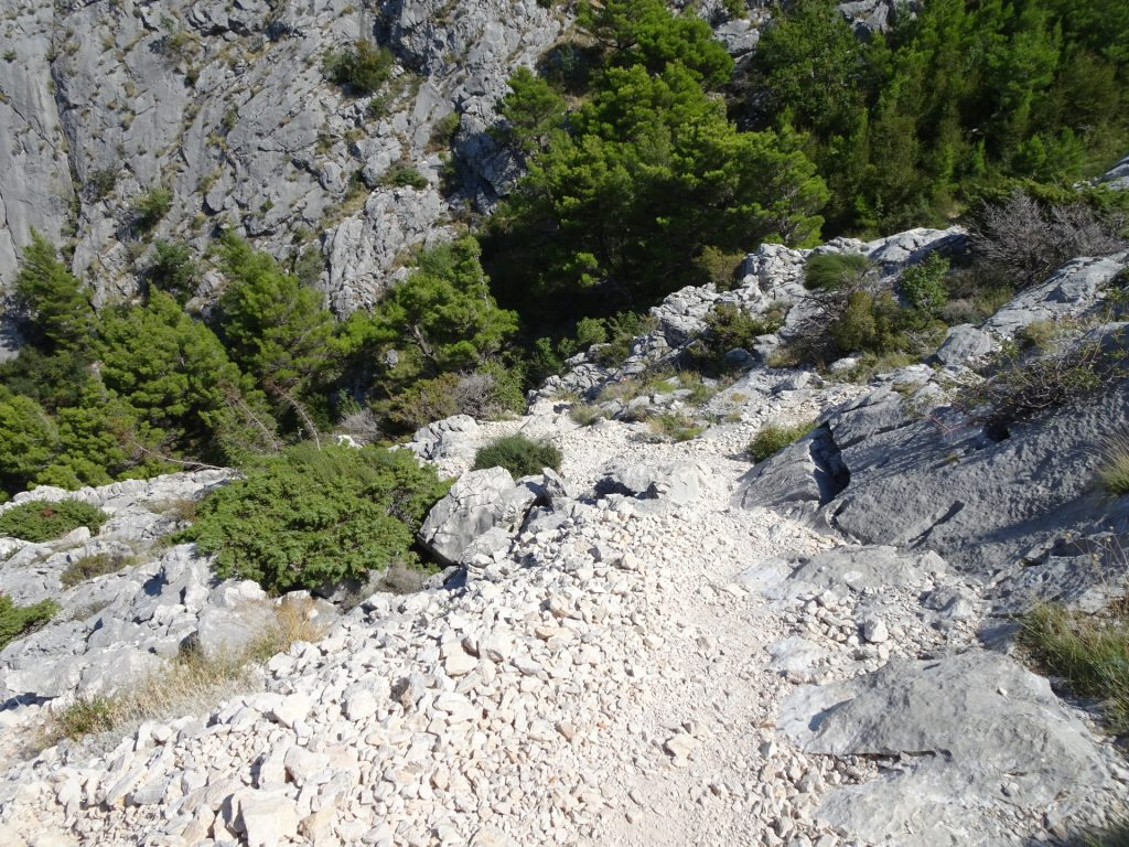 """Taking """"Planovo Fortica"""" trail downwards"""
