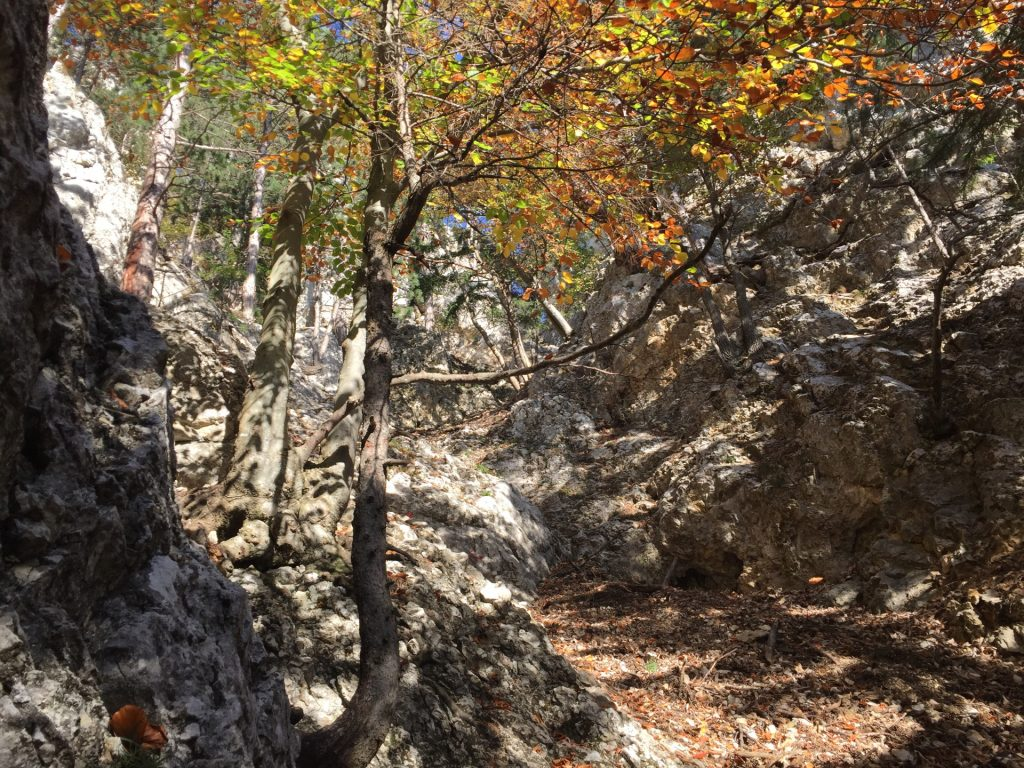 First climbing (I+)