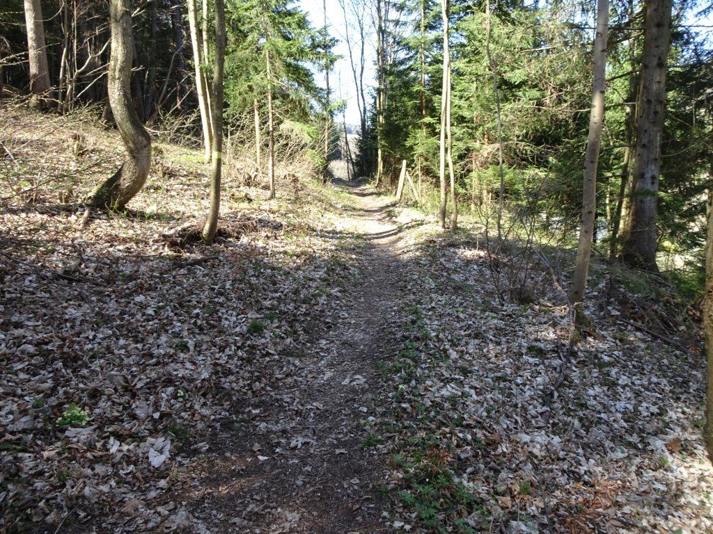 Trail towards Kleine Klause