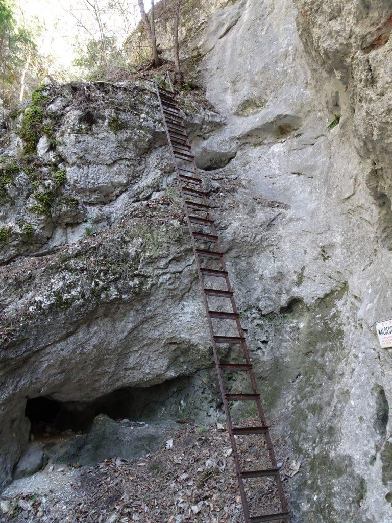 Ladder at Waldeggersteig
