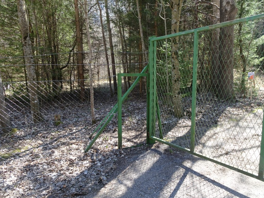 Green gate at the begin of the forest road