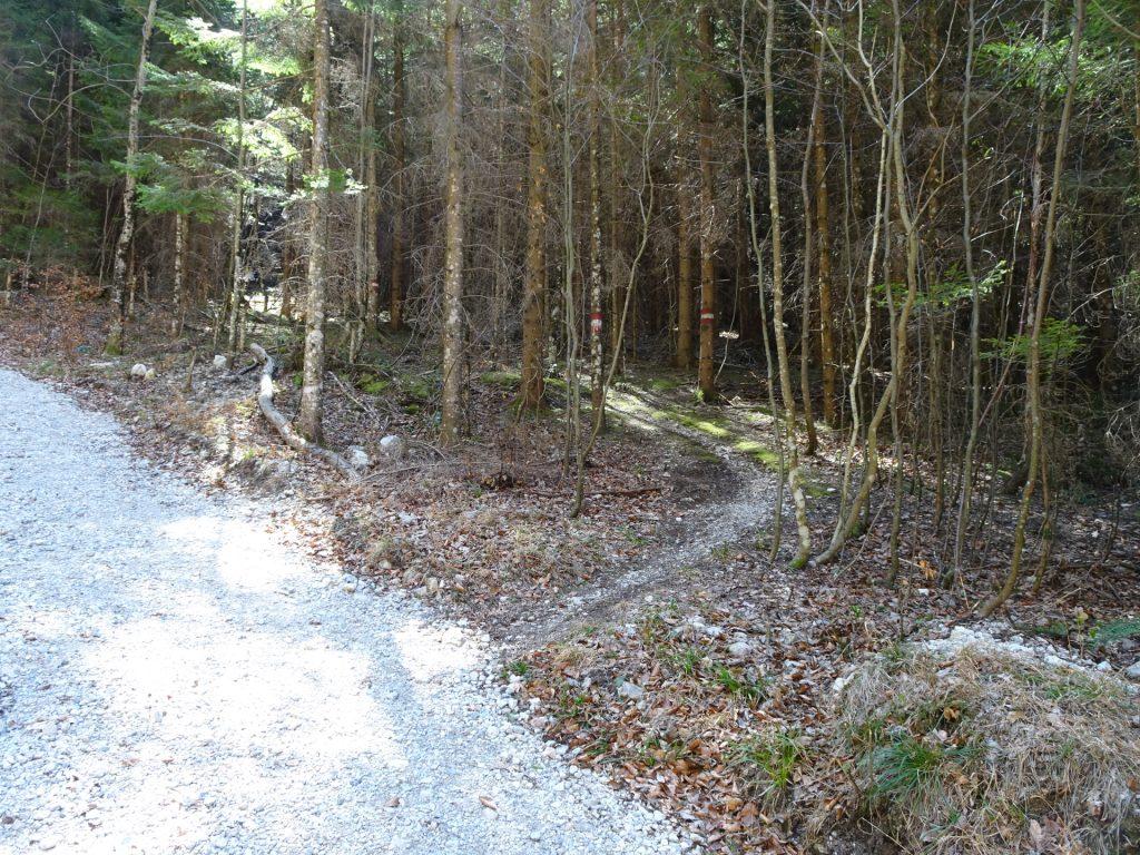 Small trail towards Hoyosteig