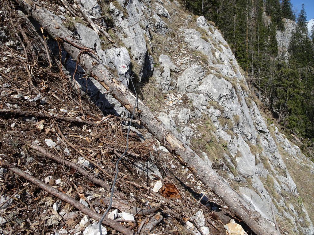 Trail is full of broken trees