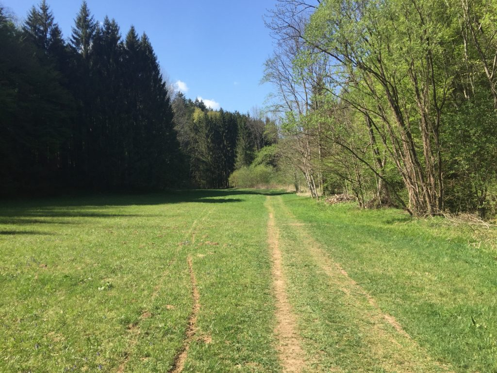 Nice trail through green meadows