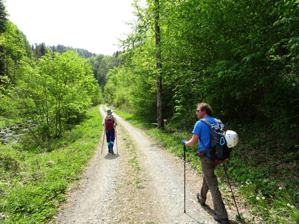 Forest road back to Vettersteig