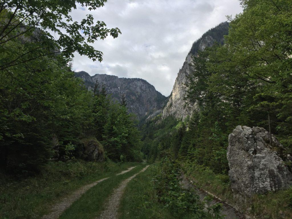 """Forest road through """"Höllental"""""""