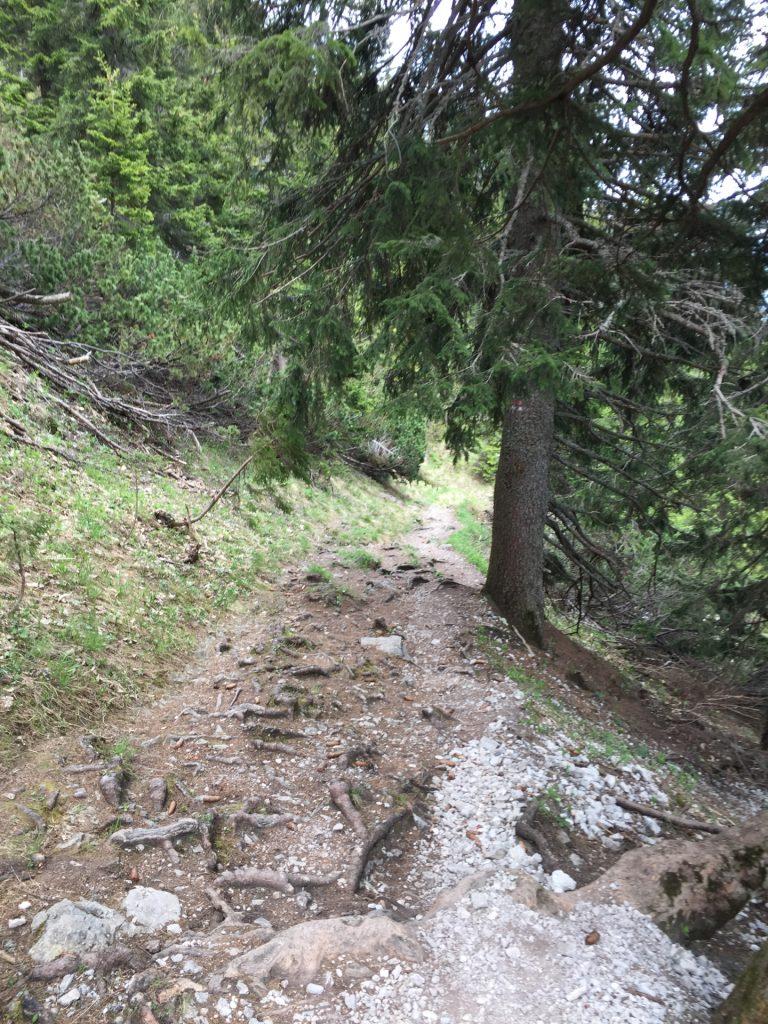 "Descending back to the valley via the easy ""Törlweg"" (hiking route)"