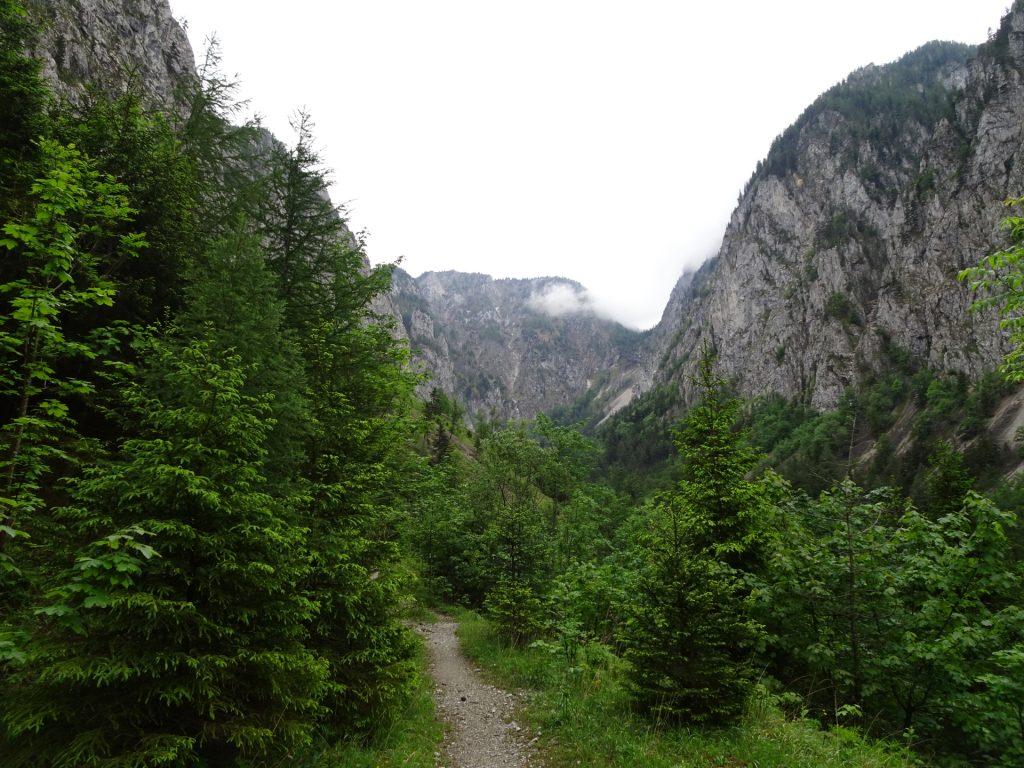 Trail through Höllental