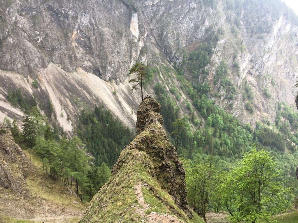 Fascinating rock and tree