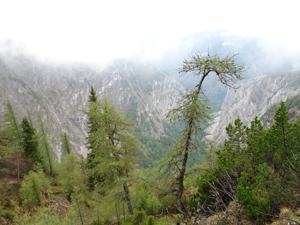 View from the trail back to Höllental