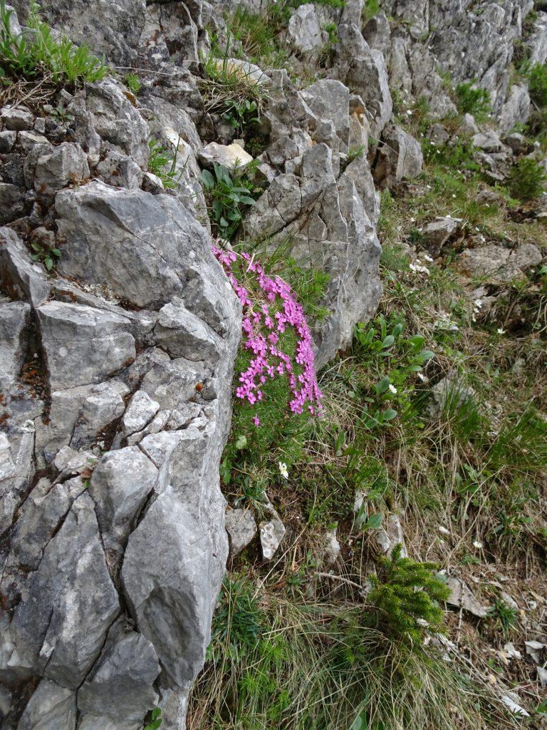 Flowers growing everywhere