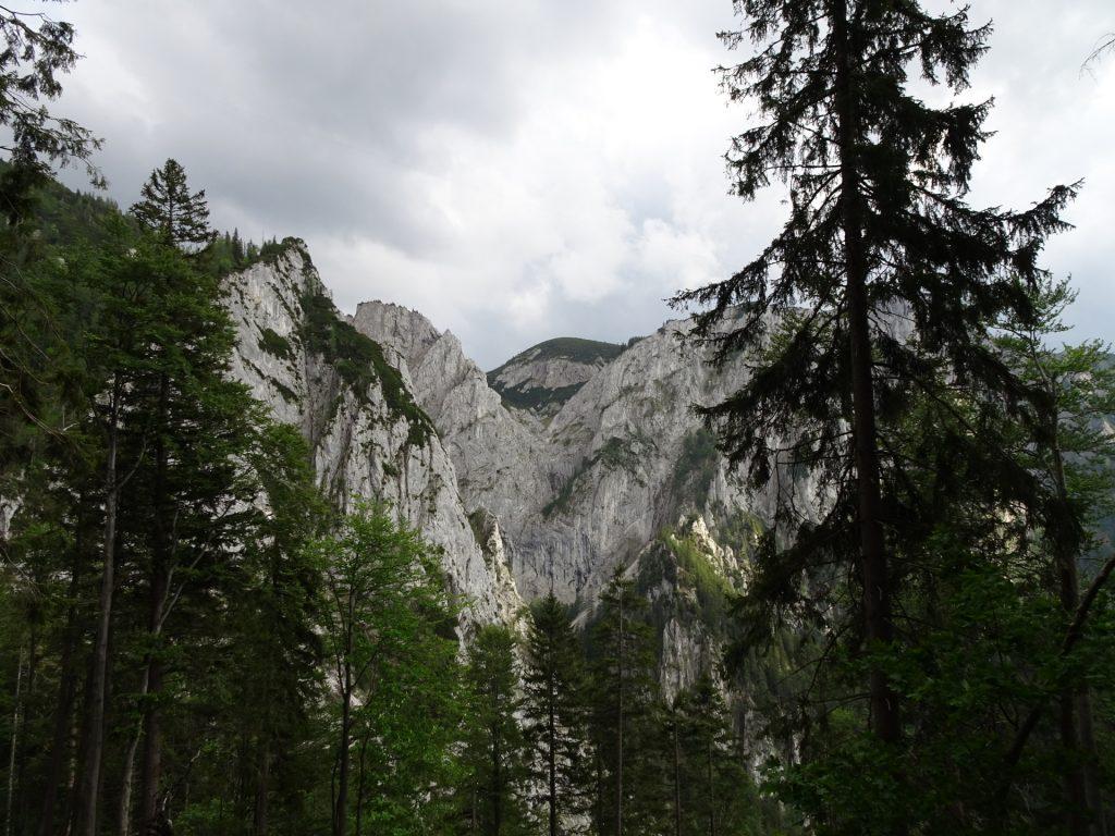 View back towards Wildfährte / Bärenlochsteig