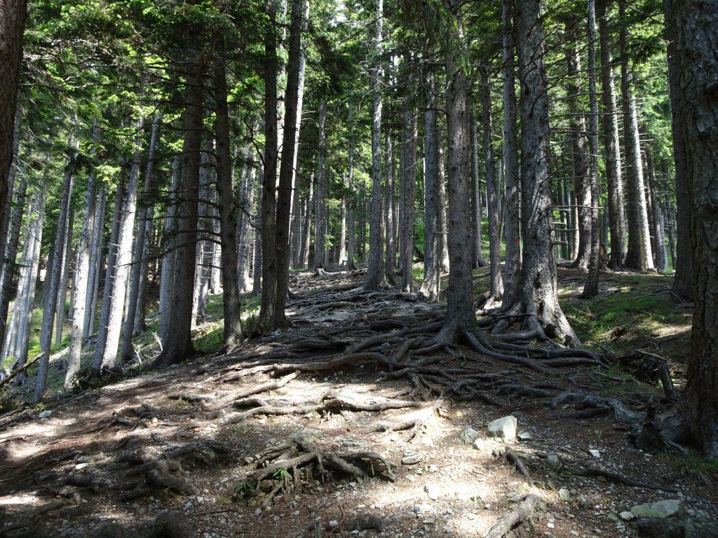 Trail upwards towards Haidsteig