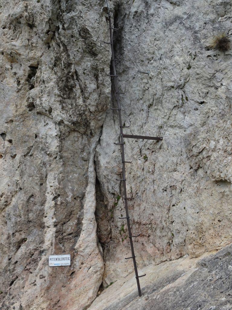 "The climbing tree marking the begin of the ""Pittenaler Steig"" via ferrata"
