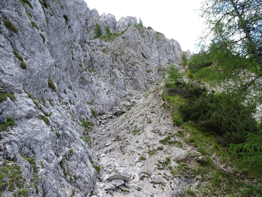Upper part of Wildfährte