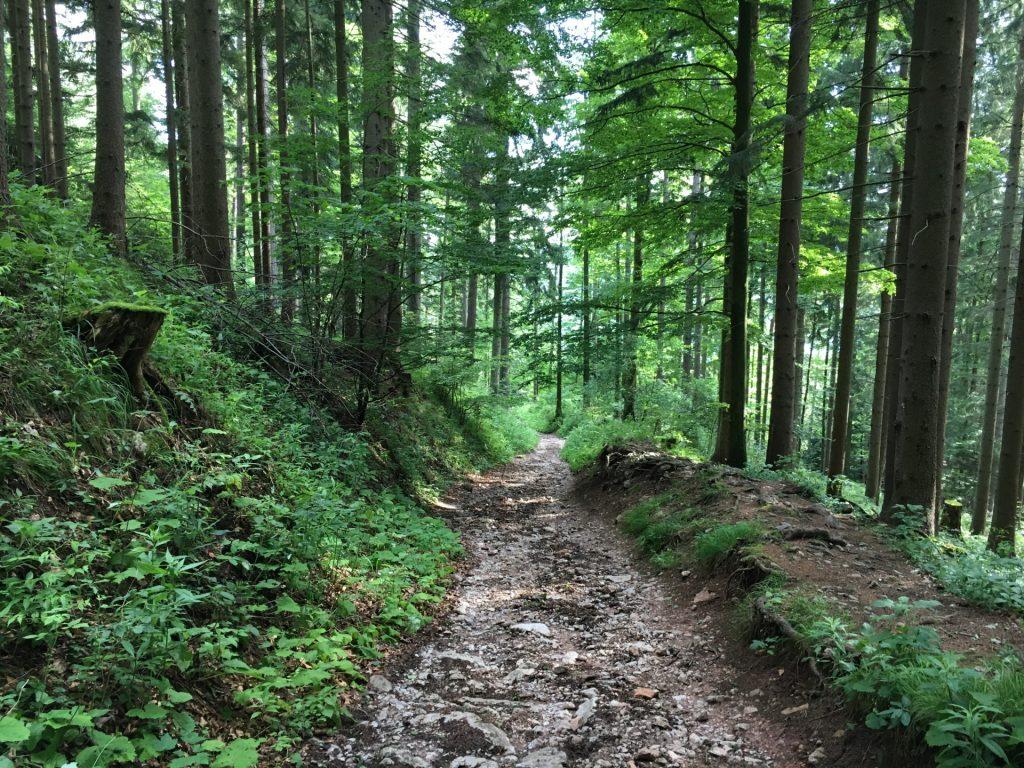 """Descending via the """"Prügelweg"""""""