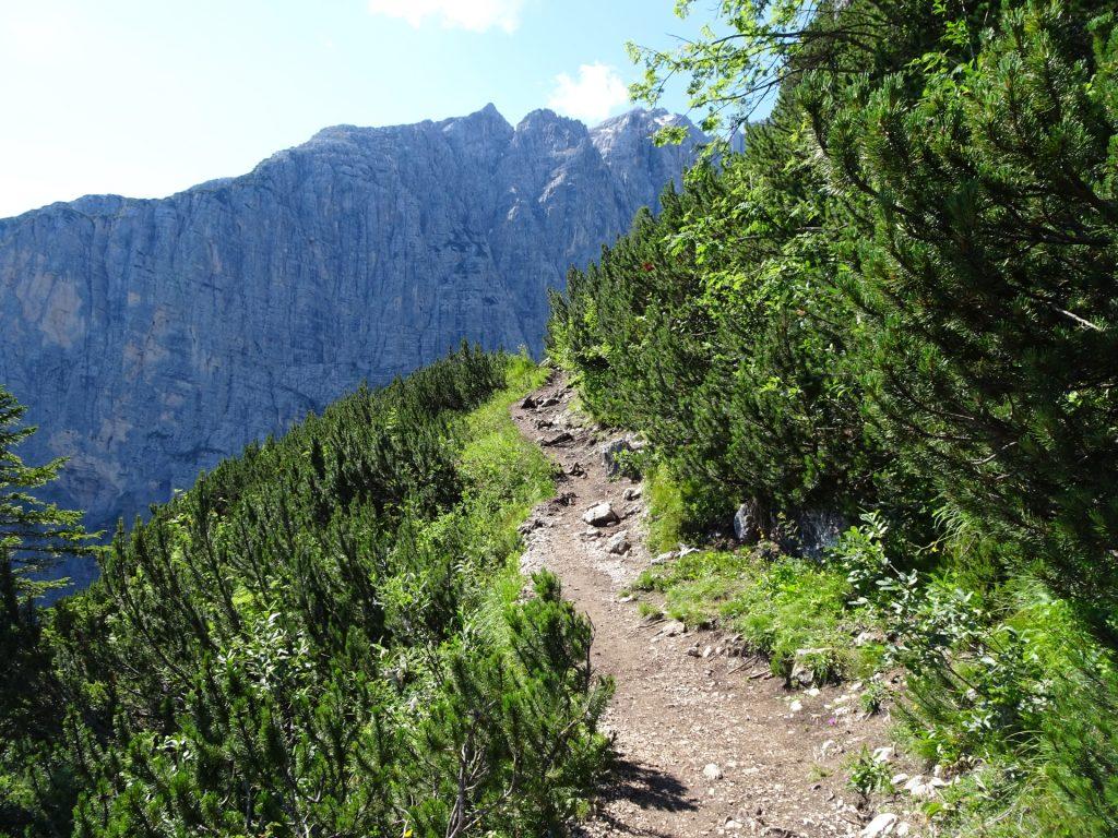 Trail 216 towards the lake