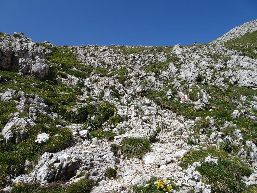 View back (beautiful mountain scenery)