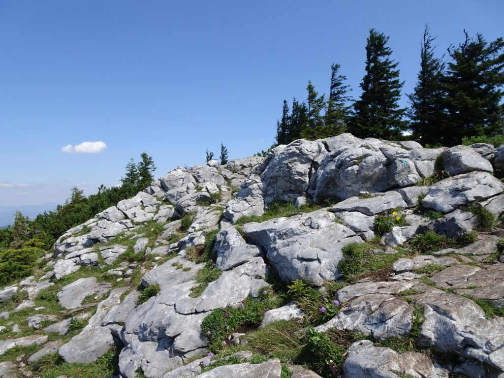"Trail towards the top of ""Hochlantsch"""
