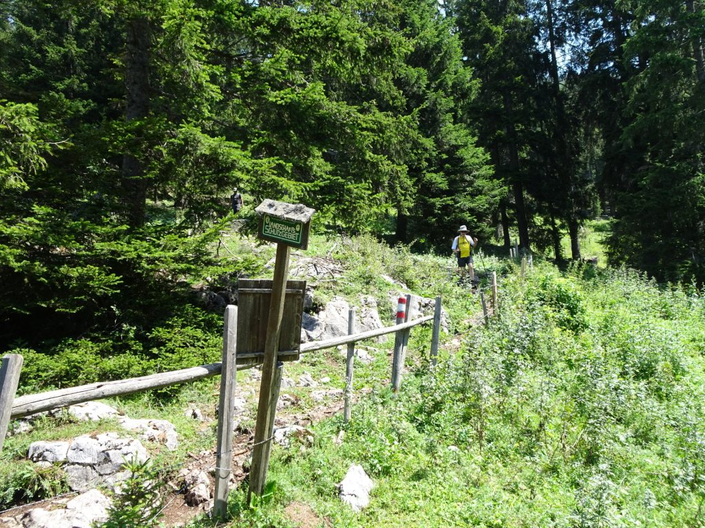 "Trail towards ""Steirischer Jokl"""