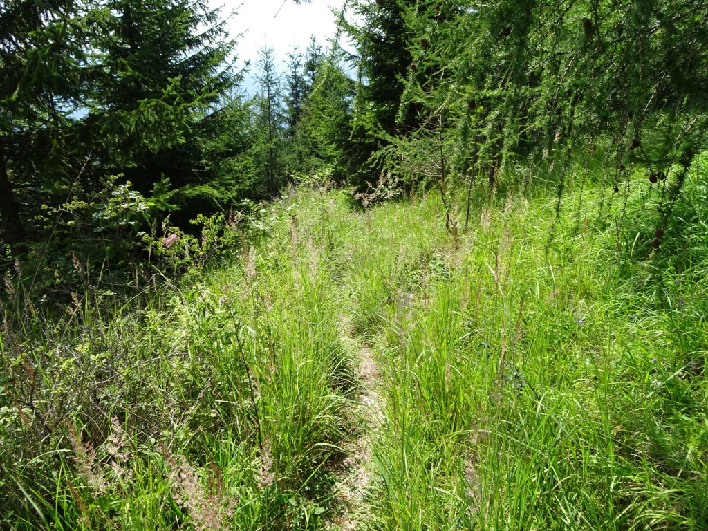 "Small trail towards ""Rannerwand"""