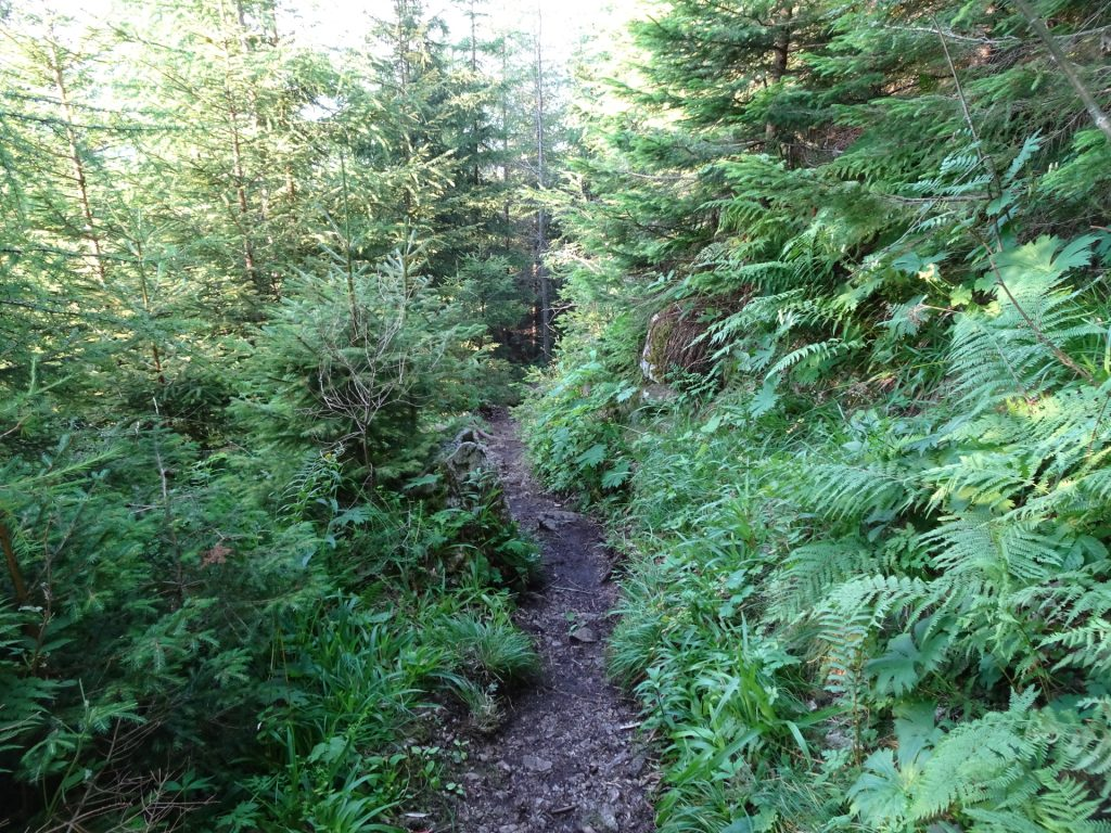 Trail downwards back to the parking