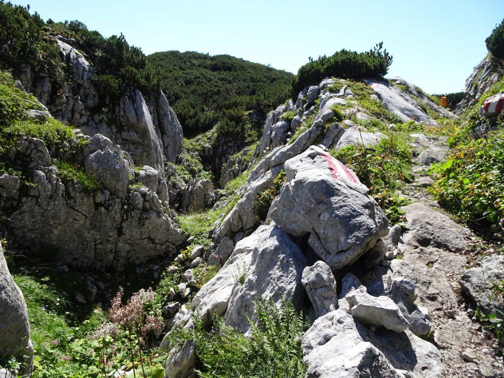 "Trail towards ""Häuslalm"""