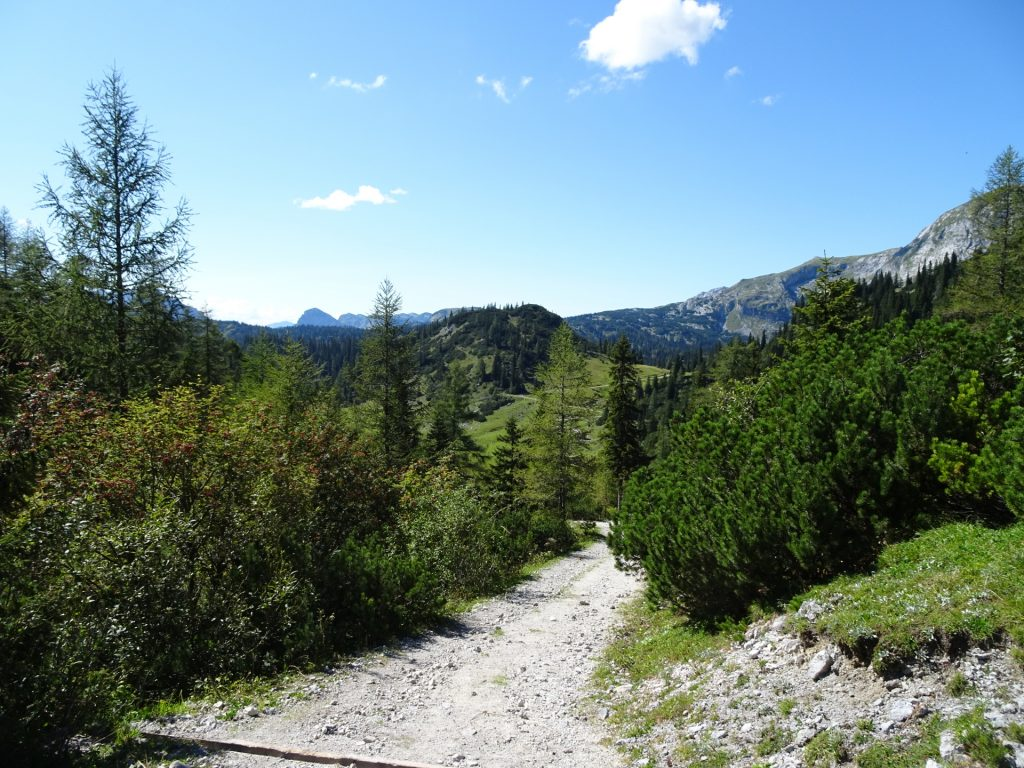 "Towards the ""Sonnschienalm"""