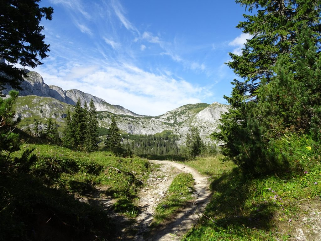 "Way back towards the ""Sackwiesenalm"" and ""Häuslalm"""