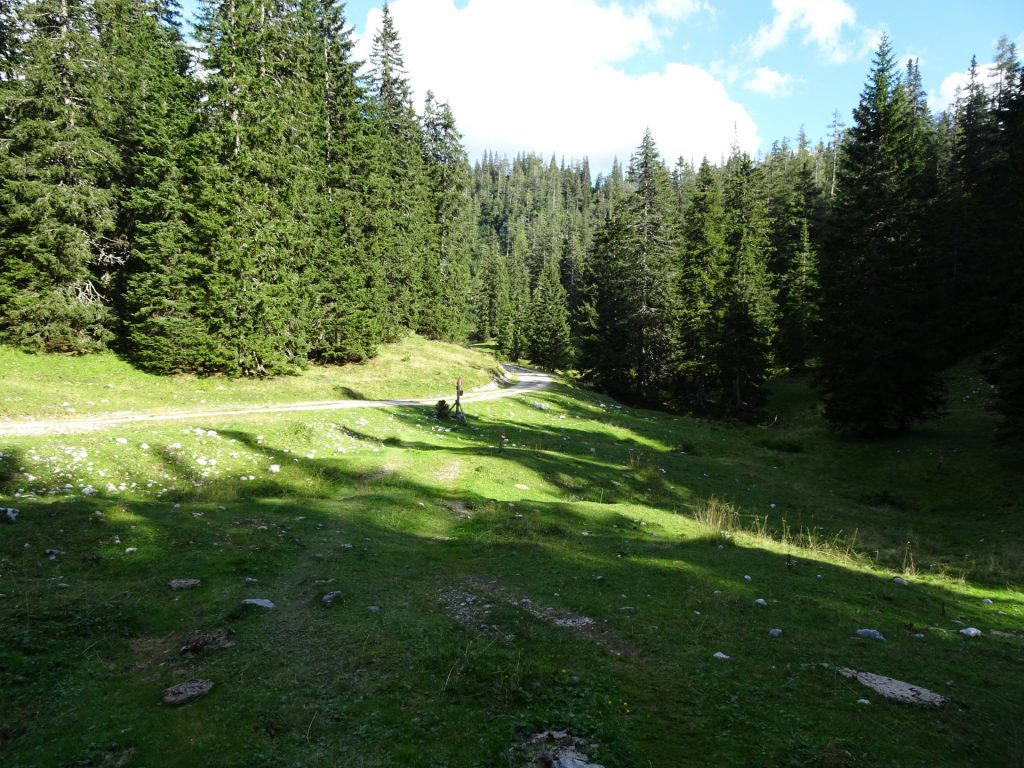 "Way back towards the ""Sackwiesenalm"""
