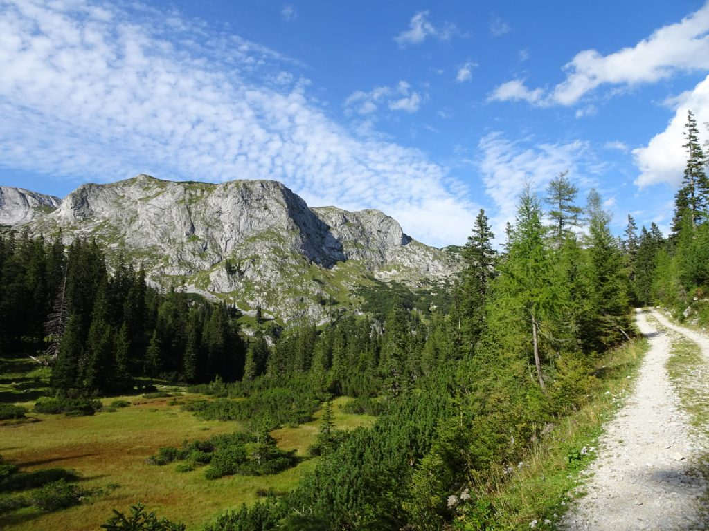 """This time, take the easy forest road and bypass the """"Sackwiesensee"""" lake (on the left)"""