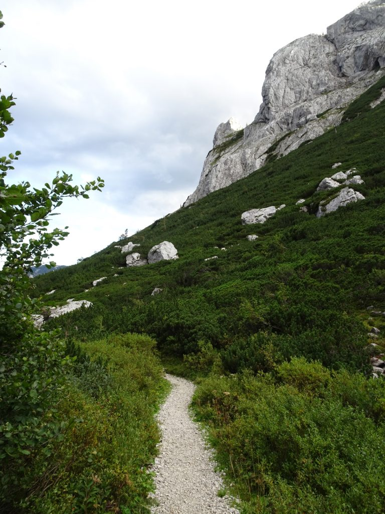 """On the trail back towards """"Bodenbauer"""""""
